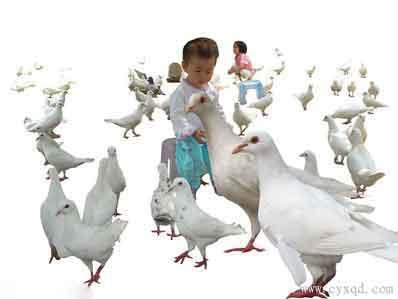 鸽你肉的出处